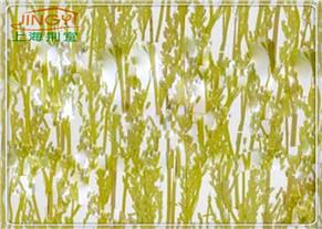 植物板透光石JY-ZW5506
